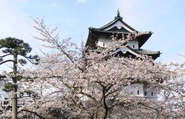 Sakurashiro